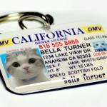 using photo id and name tags for pets